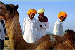 Фауна Марокко