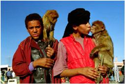 Дрессировщики обезьян