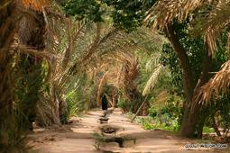 Леса Марокко